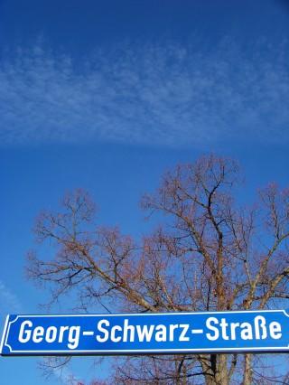 Kartierungsarbeiten an der Magistrale - Unterstützung gesucht | In der GSS sollen Bäume gezählt werden / Foto: Enrico Engelhardt