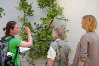Bildinhalt: Rundgang zu grünen Fassaden im Leipziger Westen | Foto: Ökolöwe