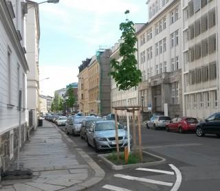 Neue Strassenbäume für Leutzsch | Baum nach Zwickauer Modell gepflanzt