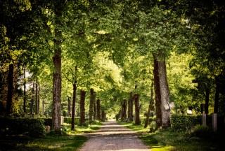 Bildinhalt: Führung mit Rainer Müller über den Lindenauer Friedhof | Bild von Alexa über Pixabay